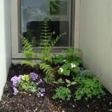 FLC Garden1