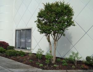 FLC Garden3